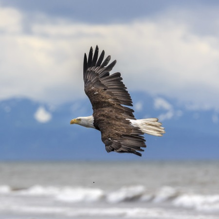 Soar Like An Eagle